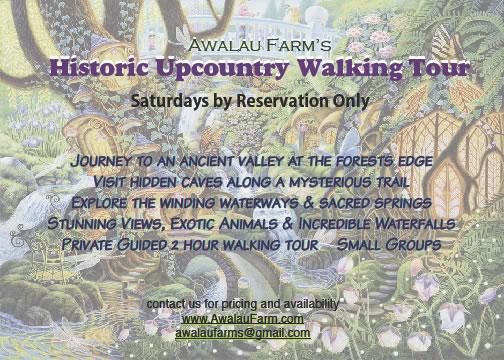 Upcountry Walking Tour